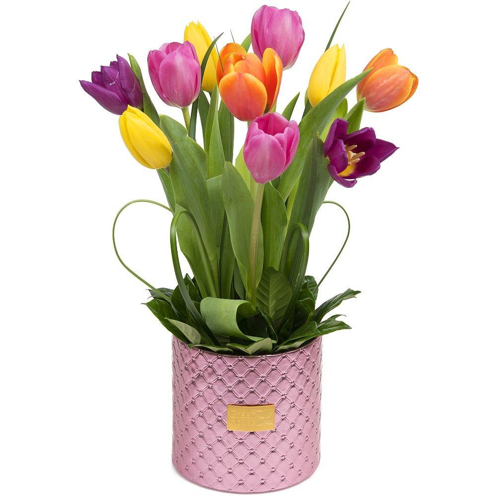 Glam Pink 10 Tulipanes